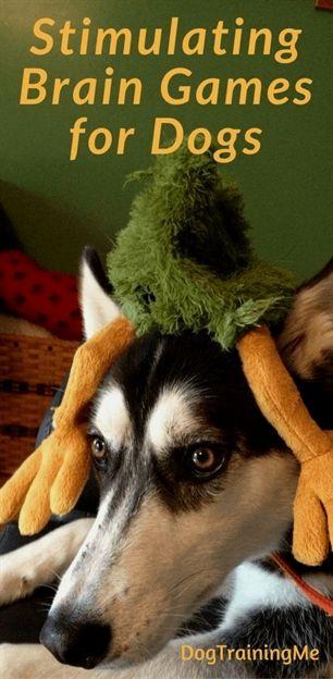 Dog Training Idiots Guide Dog Training Upper Valley Dog