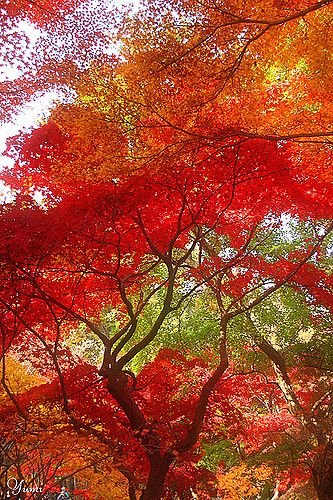 Autumn Colour Concerto