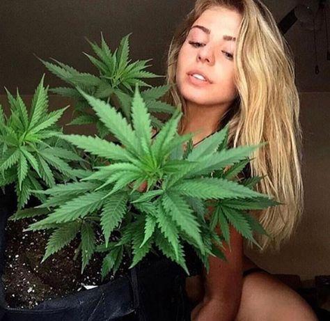 Конопля марихуана 3000 применение конопляных семян
