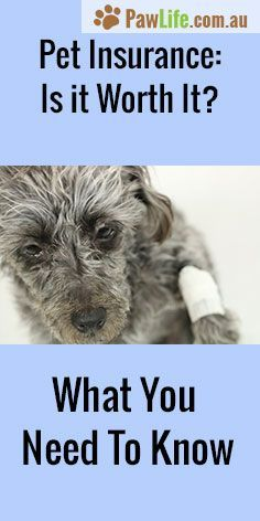 Pet Insurance Is It Worth It Is Pet Insurance Worth It What You