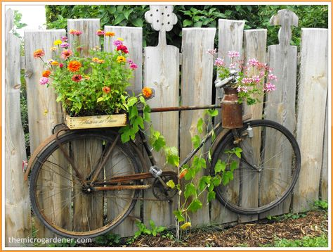 UP-CYCLED BIKE PLANTER: Don't throw it - grow in it! An old bicycle can be repurposed with micro container gardens and even used as a trellis for a climber like a grape vine. Mounted on a fence, you can create your own garden art feature. More ideas & tutorials @ http://themicrogardener.com/6-easy-diy-c ontainer-garden-projects/   The Micro Gardener
