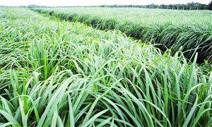http://best5.it/post/5-piante-per-tenere-lontane-le-zanzare-2/