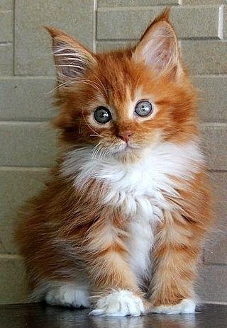 Pin On Kittycats