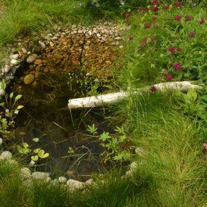 Customer Gallery Waterside Nursery Water Plants For Ponds Water Gardens Pond Pond Plants