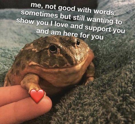 dang friend that sucks lemme hold your hand for a bit r wholesomememes Wholesome Memes Know Your Meme Wow Meme, Me Too Meme, Angel Meme, Relatable Meme, Cute Love Memes, Boyfriend Memes, Cute Frogs, Dark Memes, Stupid Memes