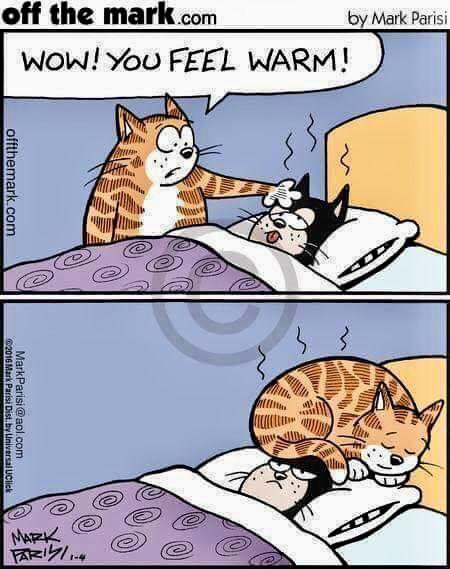 Der Warme Harmonyser Lustige Susse Katzen Katze Comic Katzen Witze
