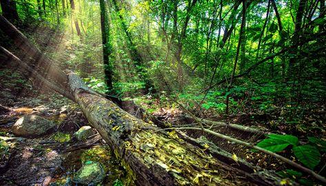 Illinois Nature Preserves