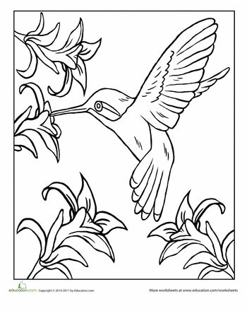 Hummingbirds Framed By Flowers Hummingbird Coloring Page