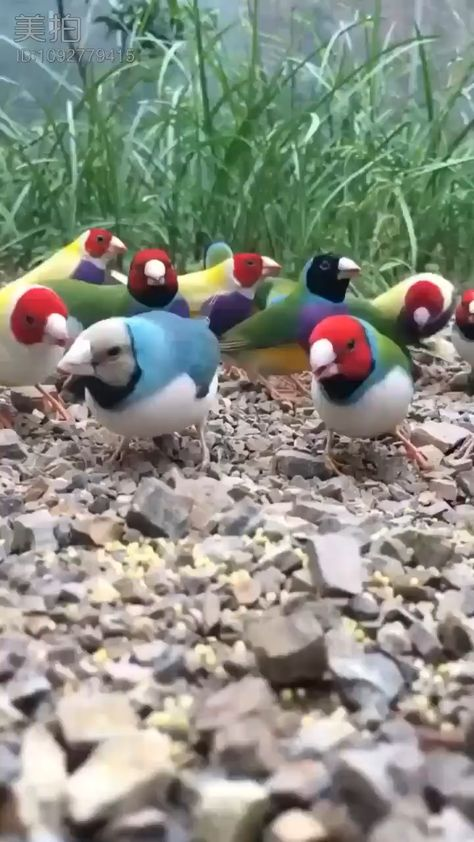 THIS IS WHY I LOVE BIRDS