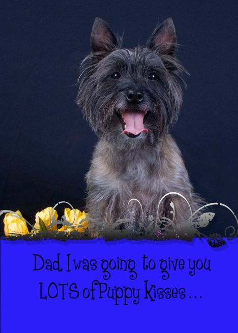 Father S Day Licker License Featuring A Cairn Terrier Card