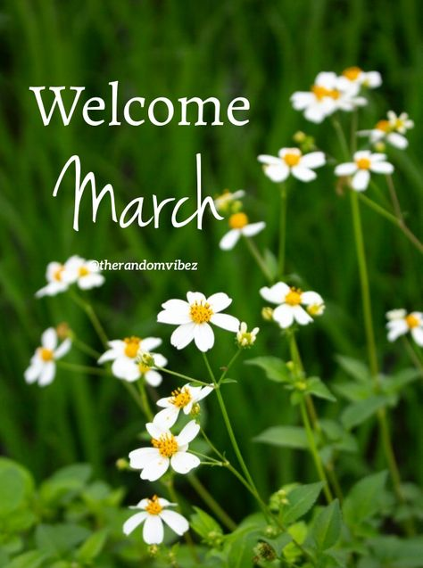 Welcome March!!! #Happymarchquotes #Marchquotes #2021Marchquotes #March2021quotes #Marchmonthquotes #Monthofspring #Hellomarchgreetings #Marchwishesandquotes #Happymonthquotes #Springmonthquotes #Marchimages #Funnymarchquotes #Hellospringquotes #Marchpicturequotes #Marchpics #Byebyefebruary #Welcomemarchquotes #Welcomespring #Beautifulmarchquotes #Marchcaptions #Instaquotes #Instastories #Marchimagesforfb #Quoteoftheday #Quotes #Quotesandsayings #therandomvibez