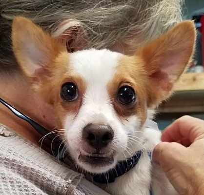 Pomfret Ct Terrier Unknown Type Medium Meet Mickey A Dog For Adoption Dog Adoption Pets Dogs