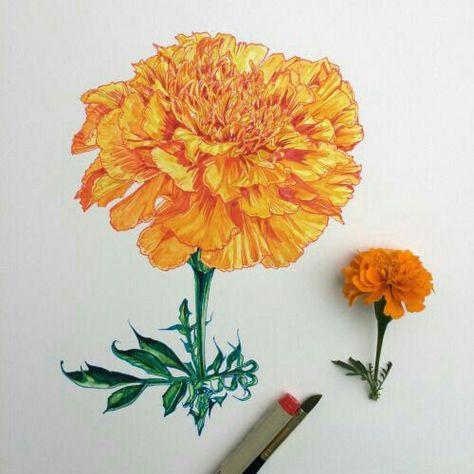 Pin De Renais Sanz En A Flower A Day Marigold Autumn Leaves En 2020 Flor Cempasuchil Dibujos Ilustraciones