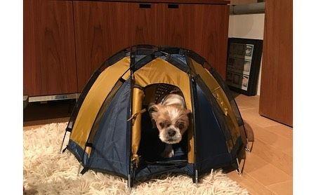 ペット用ドーム型テント selected by ハイロック 出会った瞬間に一目惚れして即購入した ペット用ドーム型テント ペット用とはいえ 6本のポールで構成されるかなりしっかりと本格的なドーム型テントに仕上がっている 部屋の片隅にぽんと置いた景