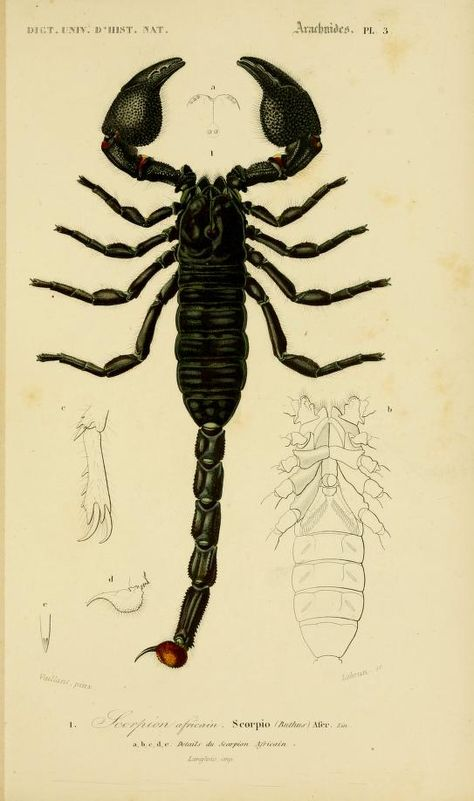 1849 - Atlas (Zoologie-Botanique) - Dictionnaire Universel D'histoire Naturelle Biodiversity Heritage Library