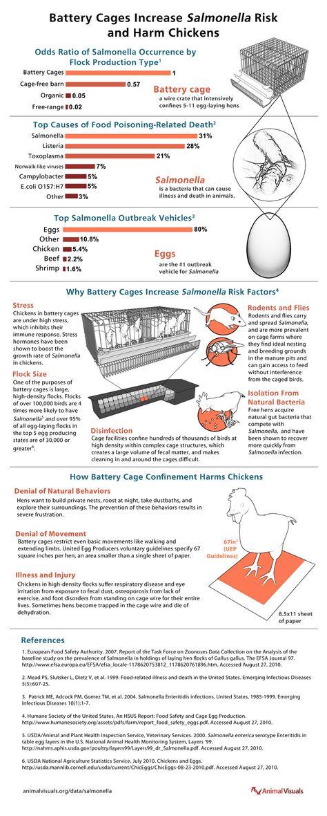 Salmonella in eggs - because youu0027re literally eating a henu0027s - fresh tabla periodica unam