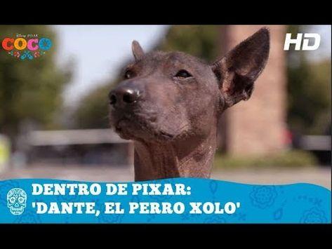 Coco De Disney Pixar Dentro De Pixar Dante El Perro Xolo