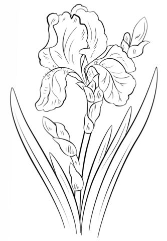 Coloring Pages Of Different Types Of Flowers. A poppy is one of a group flowering plants in the family  many which are grown gardens for their colorful flowers Description fro