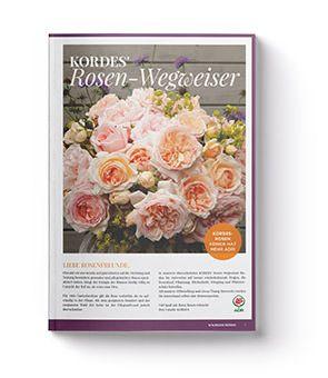 17 Rosen Kordes Katalog In 2020 Kordes Rosen Rosen Gartenrosen