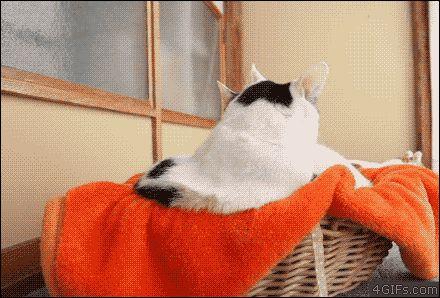 Share this Cats basket toy fight Animated GIF with everyone. Gif4Share is best source of Funny GIFs, Cats GIFs, Reactions GIFs to Share on social networks and chat.