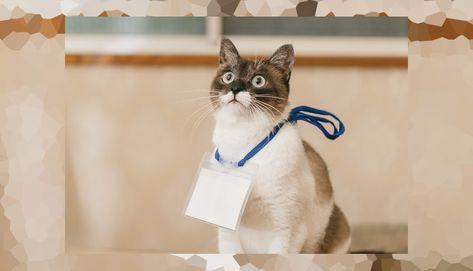 Inilah Daftar Nama Kucing Terpopuler Di Jepang Tahun Ini Wah Ternyata Ini 7 Hal Yang Membuat Kucing Pergi D Di 2020 Kucing Betina Perawatan Anjing Kucing Belang Tiga