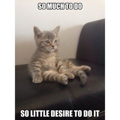 ✔ Funny Cats Memes Catnip #relatablememes #relatable #wokeaf,  #Catnip #Cats #cutestbabyanimalsfunny #Funny #Memes #relatable #relatablememes #wokeaf