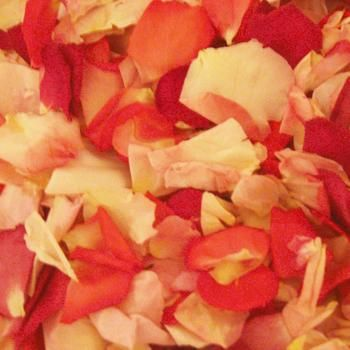 Touch of Pink Freeze Dried Rose Petals are a great way to add beauty to your reception or special event. These blended pinks, delicate Freeze Dried Petals have a natural fragrance, are Eco-friendly, and can be re-used over and over again throughout the year!