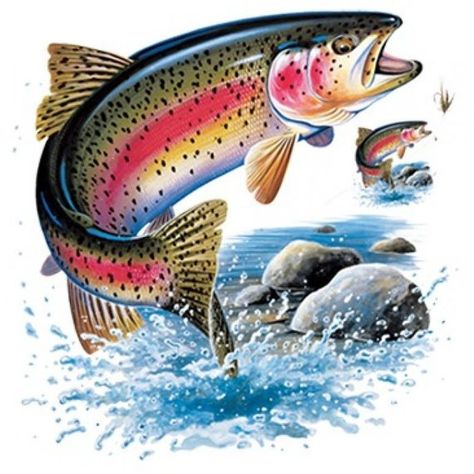 FISH: RAINBOW TROUT on One 16 inch square fabric panel to Quilt or Sew. Actual picture is approx x on white background.