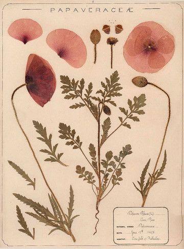 Creer Un Cabinet De Curiosites Vegetales Illustrations De Fleurs