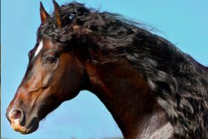 #animals #horses #wildhorses #wildanimals #animals #freebies #wallpapers