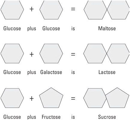 The Monosaccharides And Disaccharides Illustrated Here Are