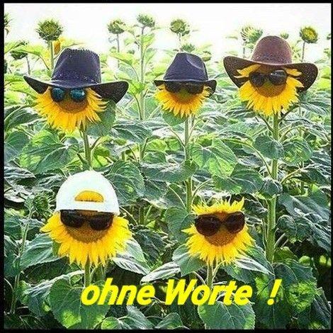Sommer Hitze Lustig Witzig Sprüche Bild Bilder Sonnenblumen
