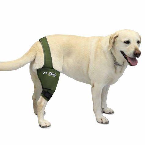 ortocanis dog knee brace