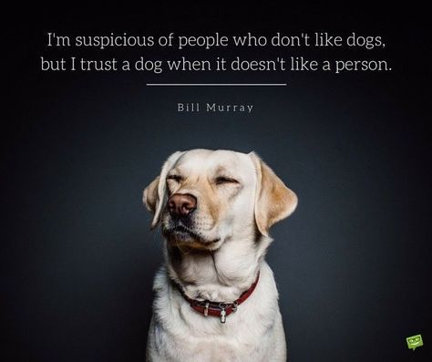 165 Dog Quotes For People Who Love Dogs Dog Jokes Funny Dog Jokes Dog Training Obedience