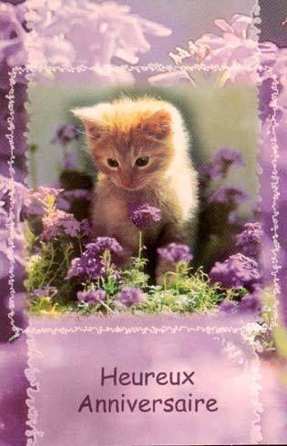 Chaton Avec Des Fleurs Vous Souhaite Un Joyeux Anniversaire