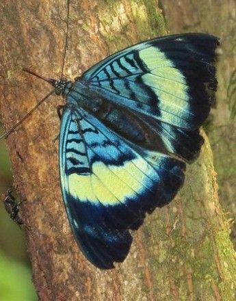 Pin Von Giereth Theresia Auf Schmetterling Insekten Falter Und