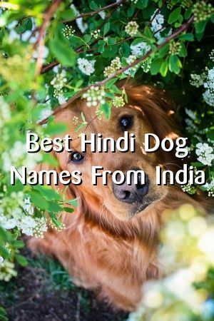 300+ Male Dog Names: Cute and Popular Boy Names For Dogs