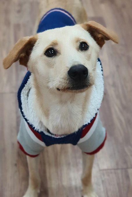 Dogs For Adoption Near Toronto On Petfinder Dog Adoption Pet Adoption Dogs
