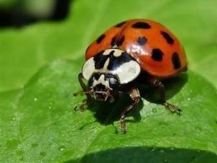 Pasxalitsa Dolofonos Http Www Kataskopoi Com 31440 Cf 80 Ce B1 Cf 83 Cf 87 Ce B1 Ce Bb Ce Af Cf 84 Cf 83 Ce B1 Ce B4 Ladybird Ladybug Flora And Fauna