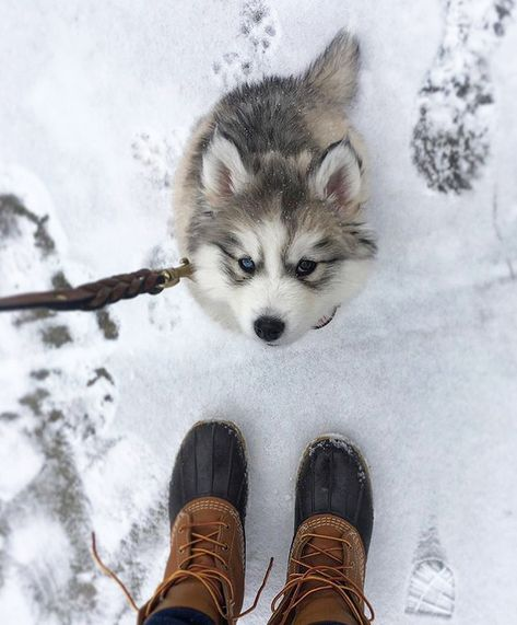 Our plans for this weekend are a little fuzzy. 🐶 What will you be doing outside? #BeanOutsider (📷: Instagram's maximusthewoollyhusky) #BeanBoots