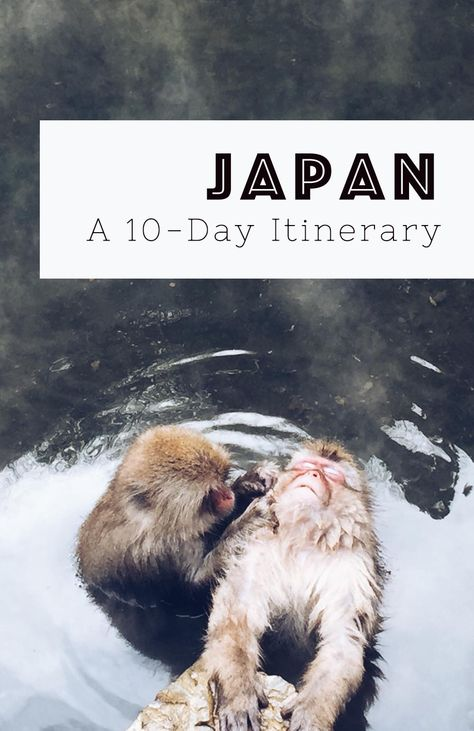 A 10-day Japan itinerary – including things to do, accommodation, and vegetarian-friendly restaurants.