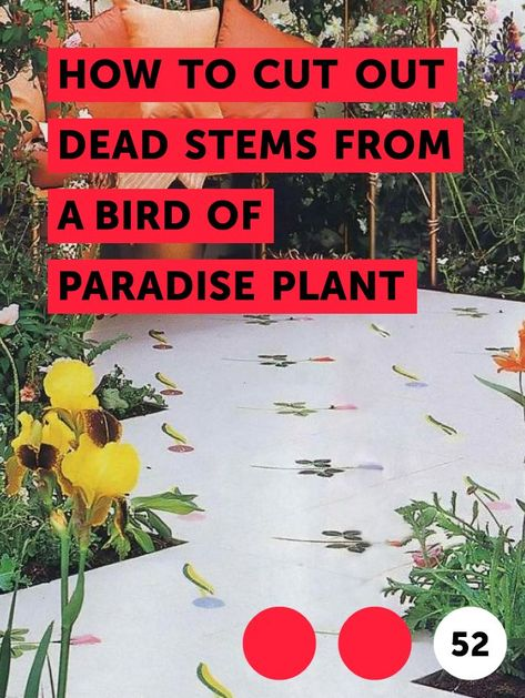 How to Cut Out Dead Stems From a Bird of Paradise Plant