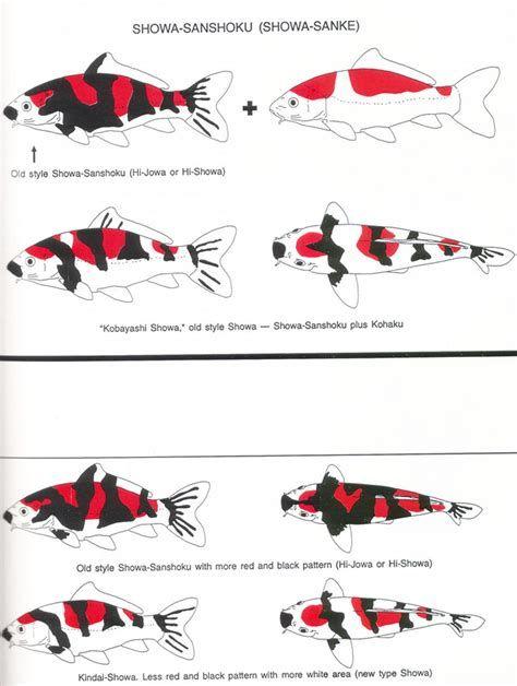 Image Result For Koi Fish Color Chart Koi Fish Colors Koi Koi Fish