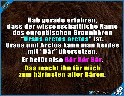 Der bärigste Bär :) #Fakt #Fakten #lustigeFakten #lachen #Humor #Spruchbilder
