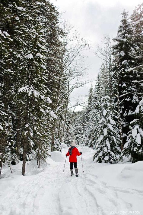 Everything You Need to Know About Trillium Lake Snowshoeing