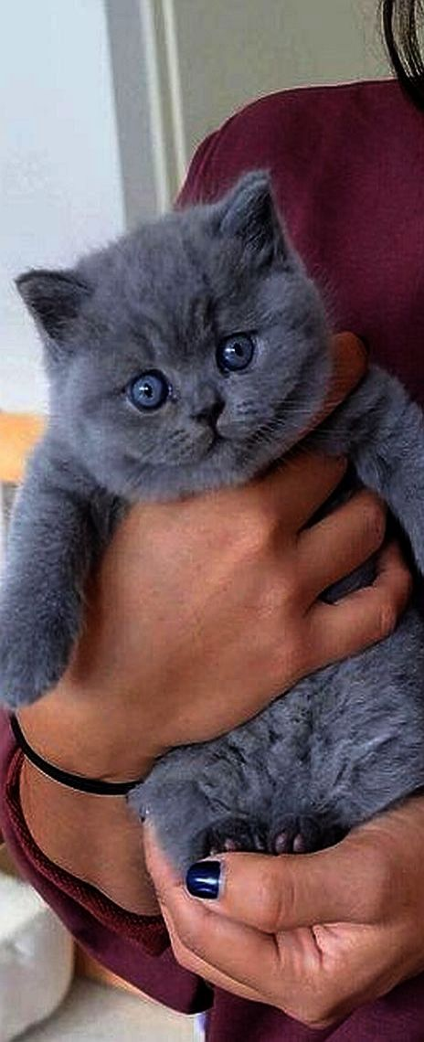 Ah Cute Cats For Sale In Pakistan Great Beautiful Cats Cats And Kittens Kitten Pictures