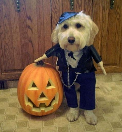 Pin By Andreea Mladin On Halloween Costumes Cute Puppy Wallpaper Dog Halloween Cute Halloween