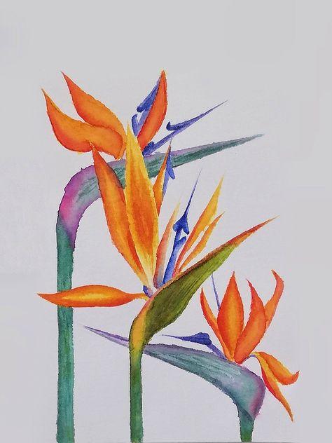 Turna Gagası- Cennet Kuşu - Sterliçya . . . #watercolor #suluboya #sterliçya #watercolorflower #suluboyaçiçek #beginnerwatercolor #flower #painting #drawing #strelitzia #cennetkuşuçiçeği