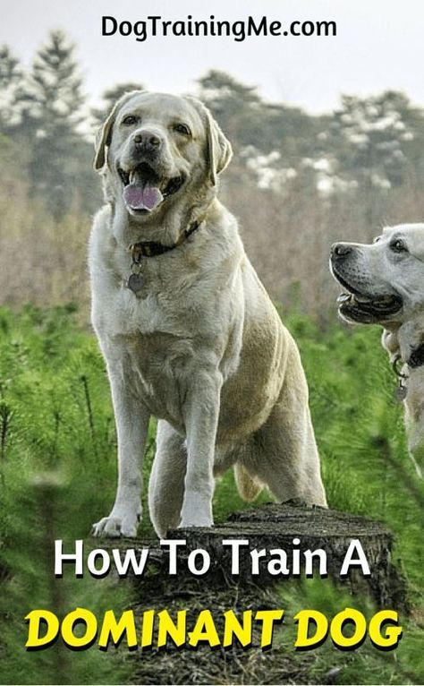 Pin By Penny Els On Husky 2020 Dog Training Aggressive Dog