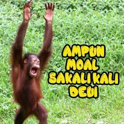 Gambar Kata Kata Lucu Monyet Https Ift Tt 2yeky2k Lucu Gambar Lucu Cartoon Jokes
